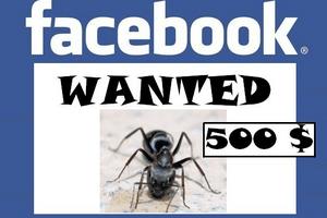 Réseaux Sociaux: Quand Facebook engage et rémunère des chasseurs de bugs…