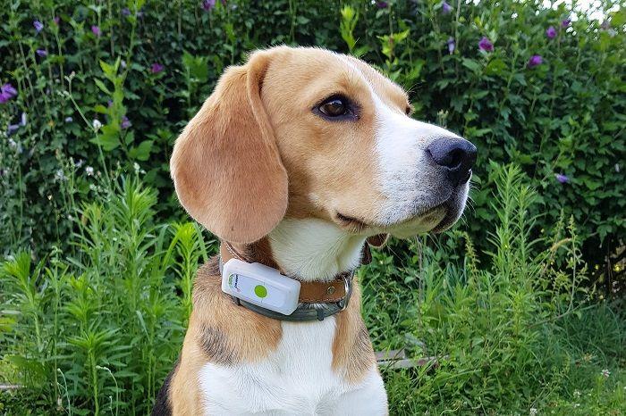 Weenect Pets Le collier GPS et le tracker d'activité pour votre chien