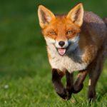 La start-up Foxintelligence annonce une levée de fonds d'1 million d'euros