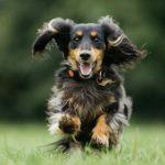 Neovia investit dans Pitpat concernant les objets connectés pour animaux