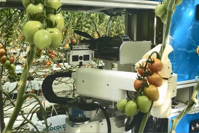 [Vidéo]: Le robot cueilleur de tomates de Panasonic sera disponible sur le marché en 2019