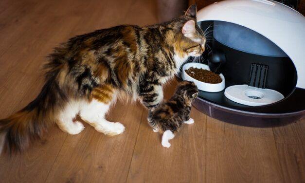 Catspad, le distributeur de croquettes et d'eau automatique et connecté qui révolutionne la vie des propriétaires de chats