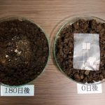 Des scientifiques japonais inventent un capteur électronique biodégradable