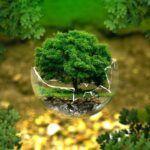 Renouvellement forêt