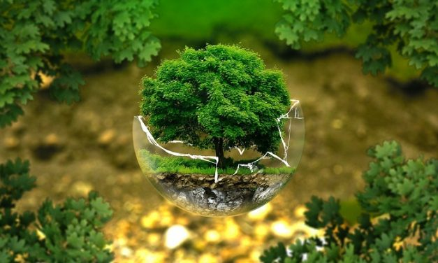 Avec le nouveau concept Ecotree, vous pouvez acheter des arbres sur internet tout en devenant Ecoresponsable