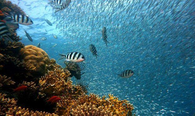 Google développe une caméra sous-marine pour améliorer la pisciculture