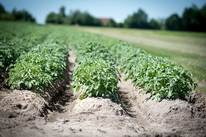 Veragrow, une start-up Normande qui utilise des vers de terre pour produire un engrais 100% naturel