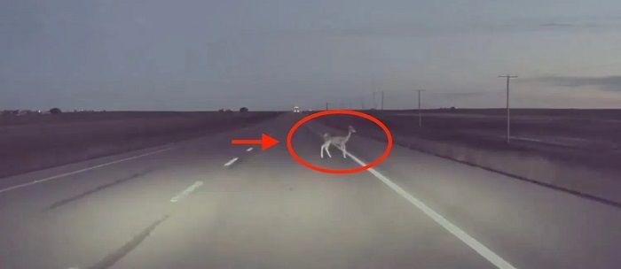 [Vidéo]: Regardez l'autopilote de Tesla éviter un cerf à la dernière minute