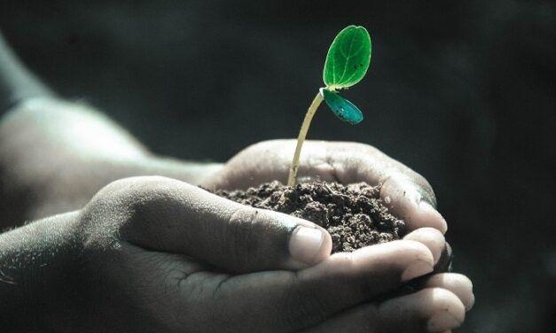 [Podcast]: Maintenir une croissance à 3 chiffres malgré la crise – Geoffrey Vion