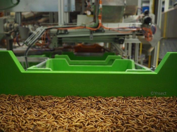 Ÿnsect, le fabricant de la ferme d'insectes la plus chère du monde, lève 224 millions de dollars supplémentaires