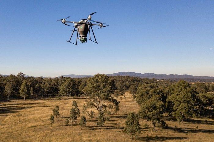 La start-up Dendra Systems lutte contre la déforestation en combinant intelligence artificielle et drones