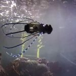 [Vidéo] :Regardez ce robot calmar se propulser dans l'eau à l'aide de jets pour explorer les fonds marins