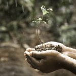 croissance-mangopay