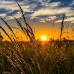 Ombrea et sa solution de prévention climatique pour les cultures lève 10M€