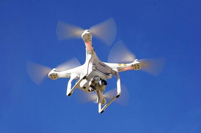 [Vidéo]: En Australie, des corbeaux attaquent des drones de livraison
