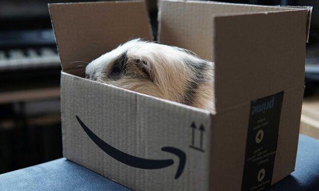 Les membres d'Amazon Prime peuvent désormais envoyer des cadeaux via téléphone ou email